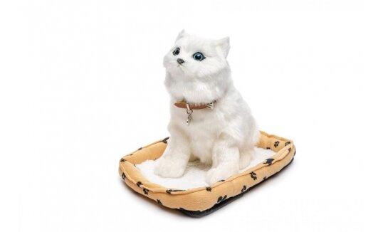 חתול יושב ומיילל לבנה