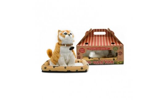 חתול יושב ומילל גינגית